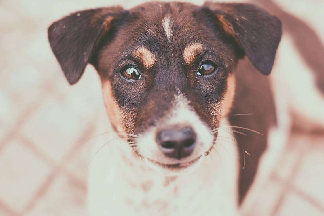 Many Individuals Imagine That Dog Training Is Challenging Several