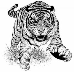 Http Hsanalim Hubpages Com Hub Coloring Pages Endangered Animals Kids Children Colouring Printout Animal Coloring Pages Free Coloring Pictures Animals