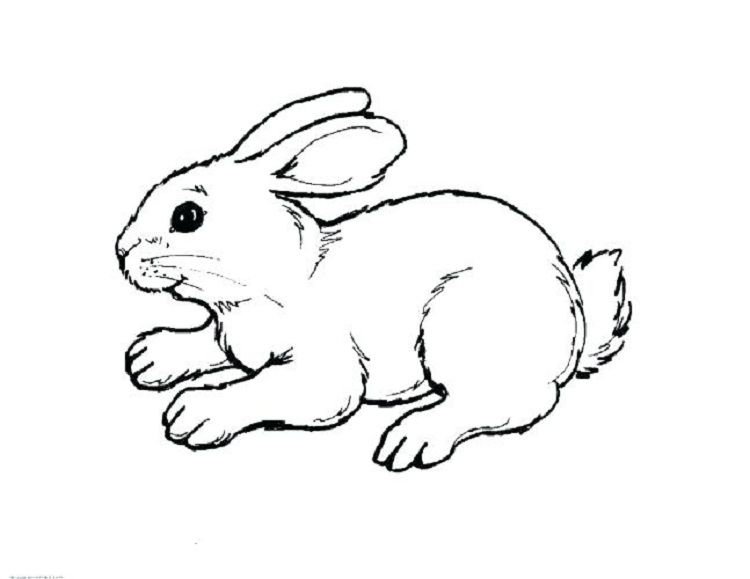 Animal Coloring Pages Rabbit Bunny Coloring Pages Animal Coloring Books Zoo Animal Coloring Pages
