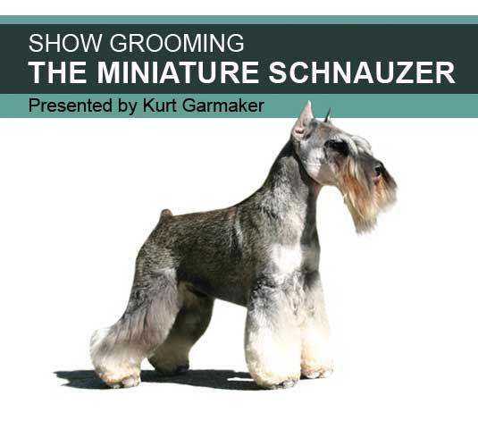 American miniature schnauzer grooming chart