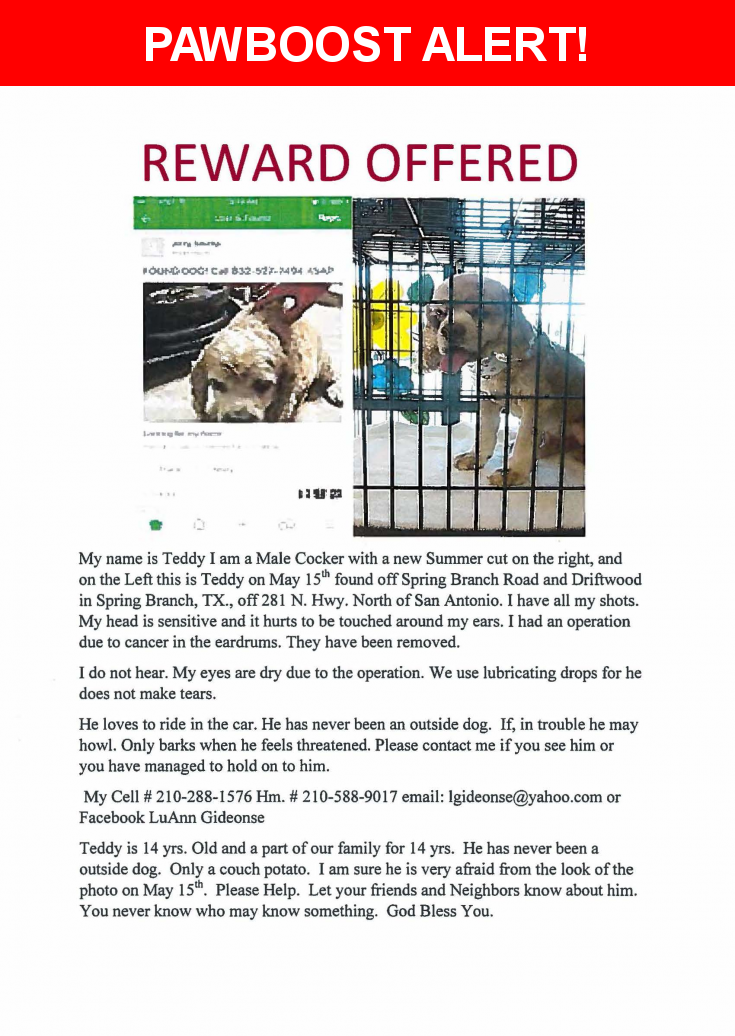 Please spread the word! Teddy was last seen in Spring Branch, TX 78070.  Message from Owner: Last seen Rivermont subdivision Spring Branch Road and Driftwood in Spring Branch, Tx. 78070  Nearest Address: Near Driftwood Ridge Rd & Spring Branch Rd