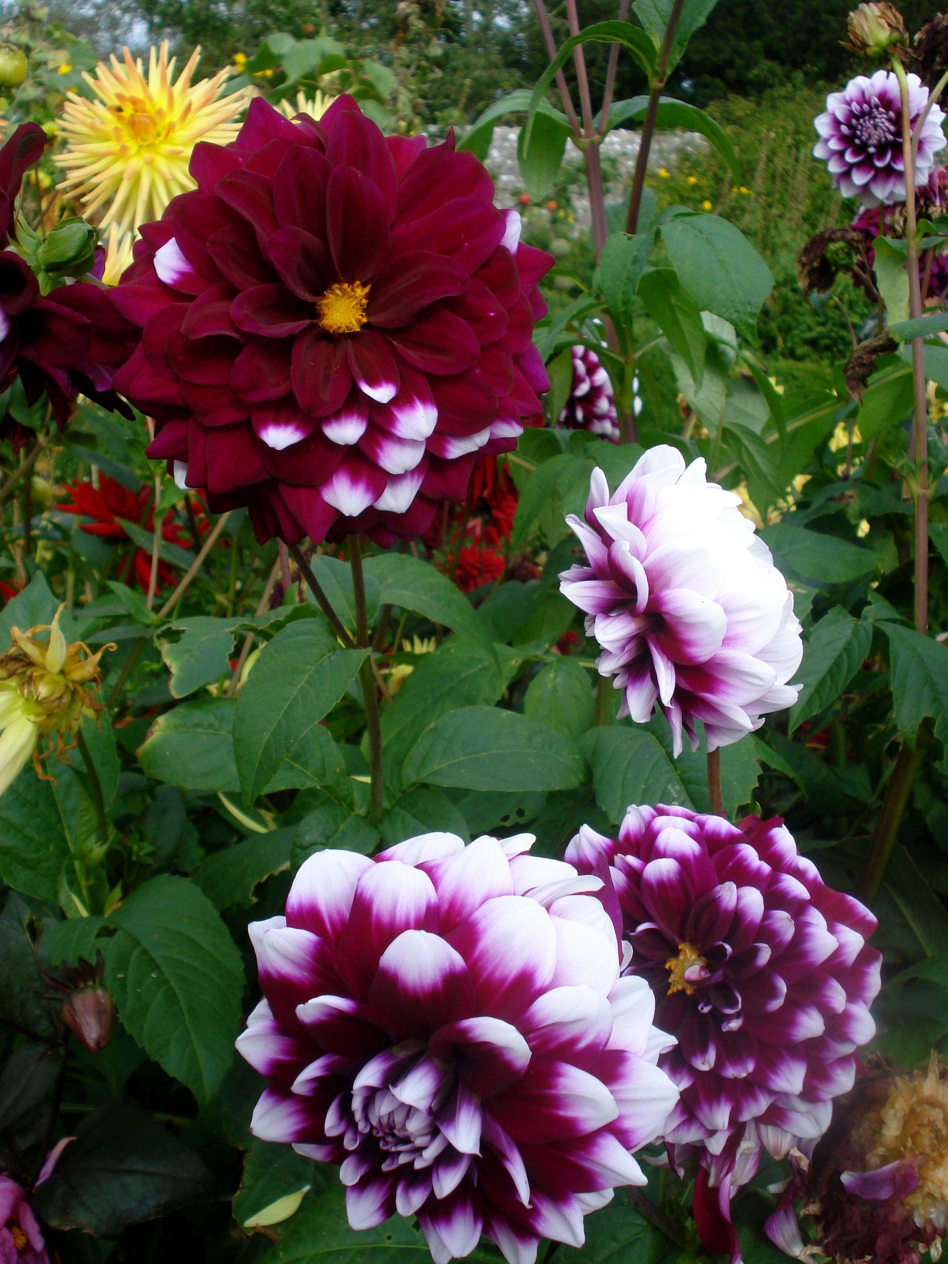 Beautiful Flowers Images Beautiful Flowers In The Garden At