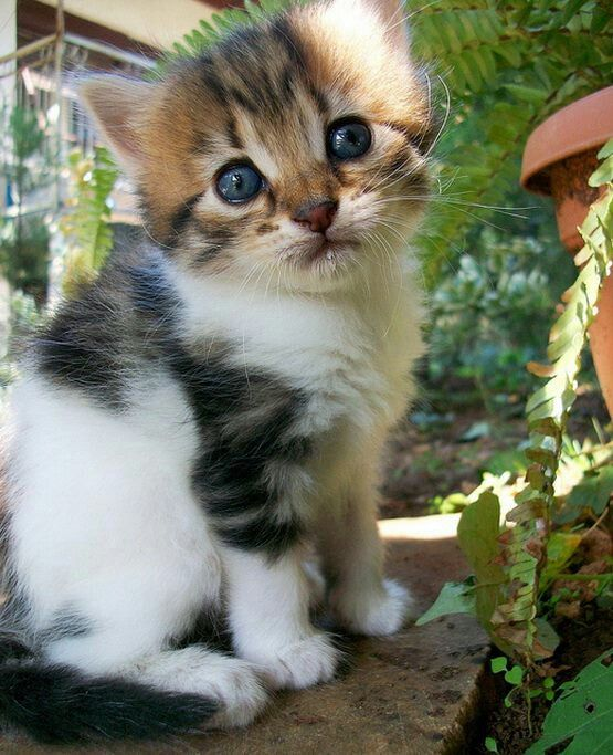 Z O O Dog Cat Pictures Kittens Cutest Baby Kittens