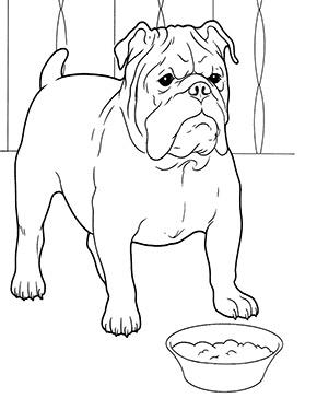 Ausmalbild Bulldogge Hund zum kostenlosen Ausdrucken und ...