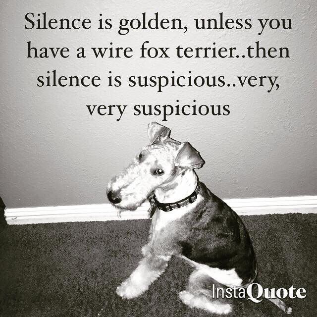 I don\'t like it. It\'s too quiet ! | Fox Terrier loveliness ...