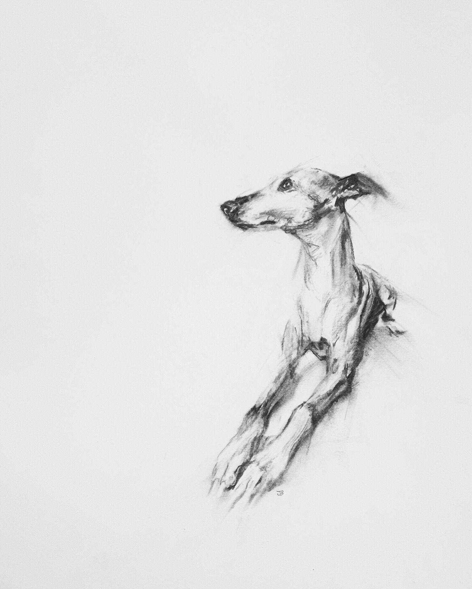 Willow By Julie Brunn Con Imagenes Arte De Galgos Pintura