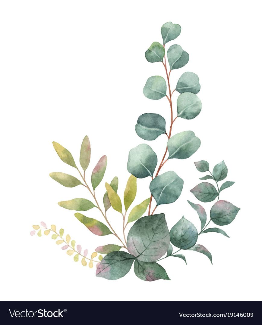 Watercolor vector bouquet with green eucalyptus leaves and