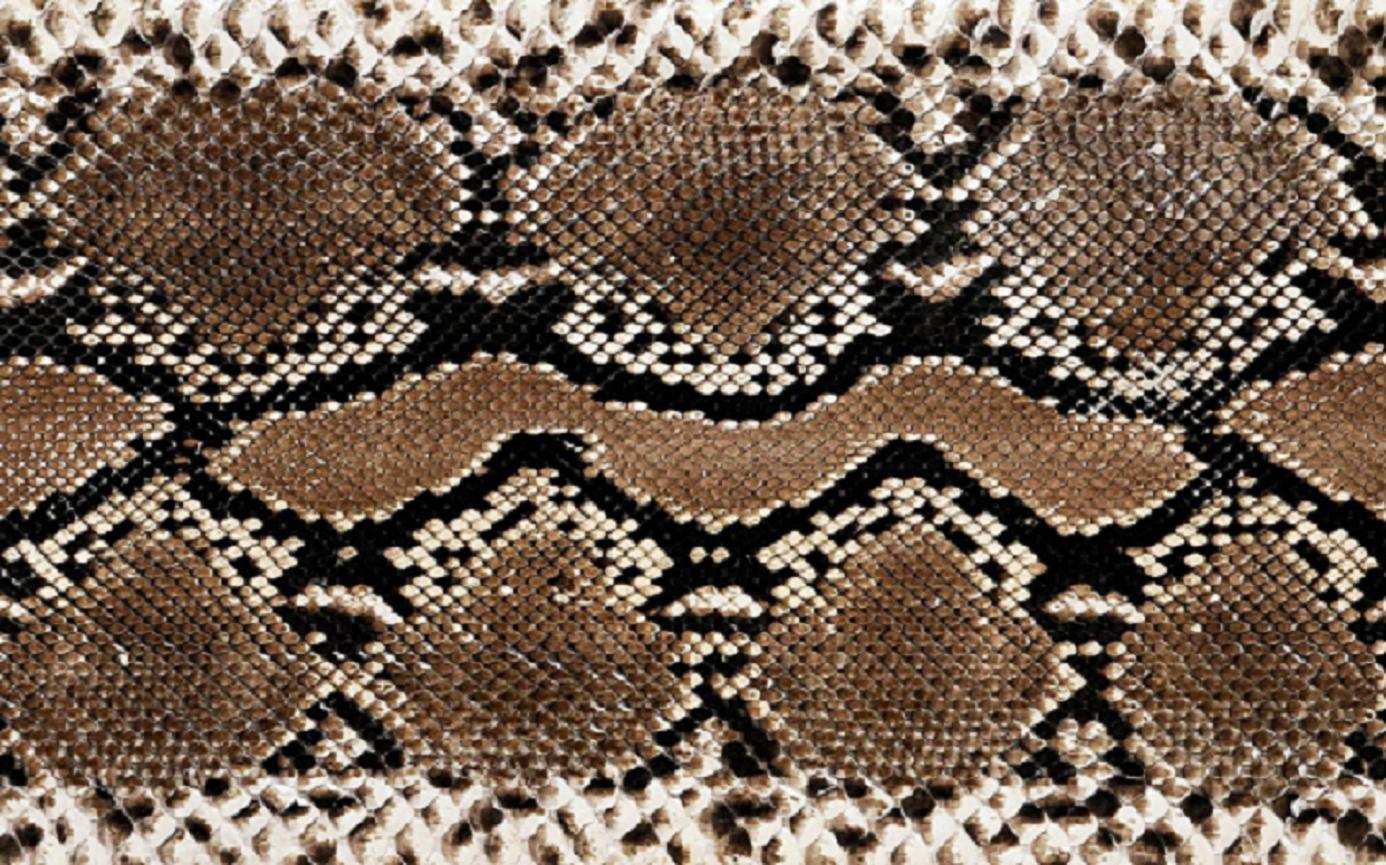 image result for skin ball python | rv bus camper | pinterest | rv bus