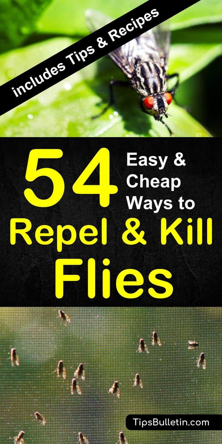 54 Easy And Cheap Ways To Repel