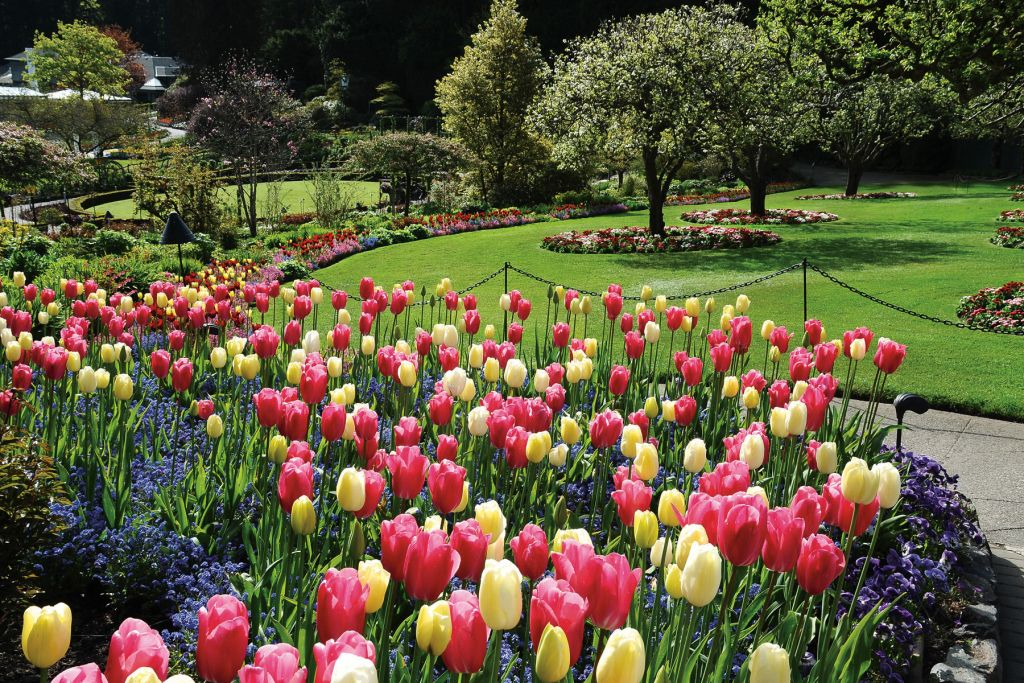 6674759e55038c63475d34d7ae60030d - How Much Is Admission To Butchart Gardens