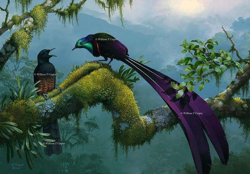 студии картинки с райскими птичками картинки тегом лабрадор