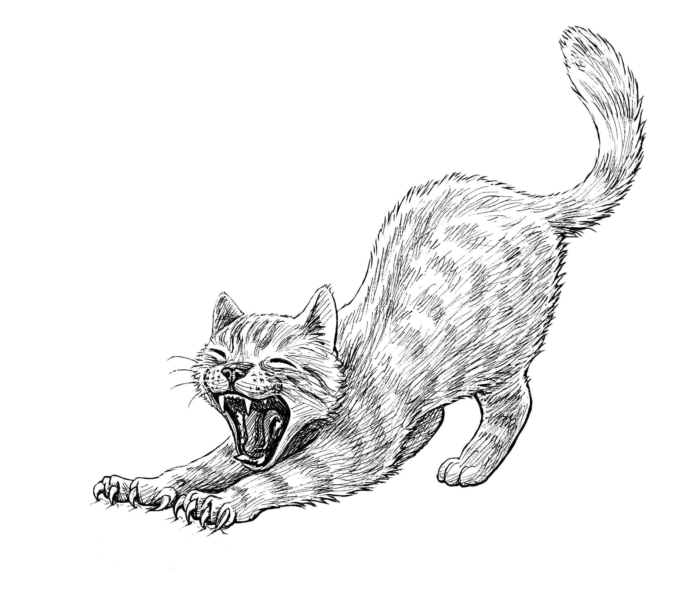 19 best My cats. Live and illustrated. By Freydís Kristjánsdóttir ...
