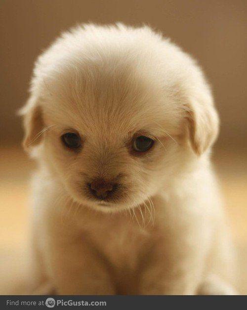 seriously!? Adorable!