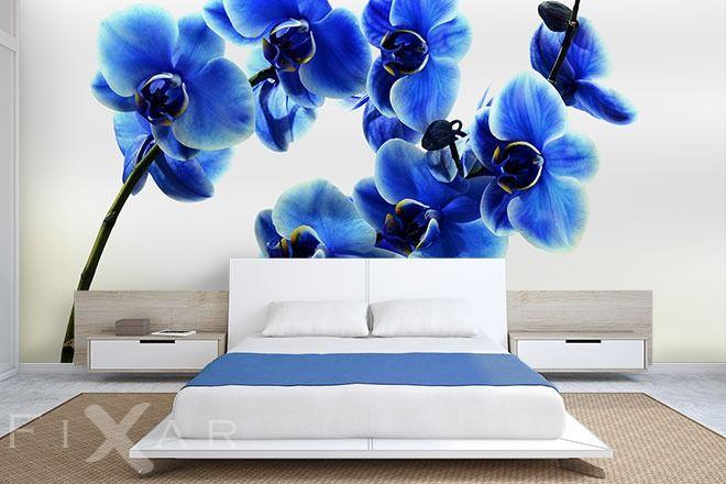 Himmlische Orchideen | Wow | Pinterest | Fototapete orchidee ...