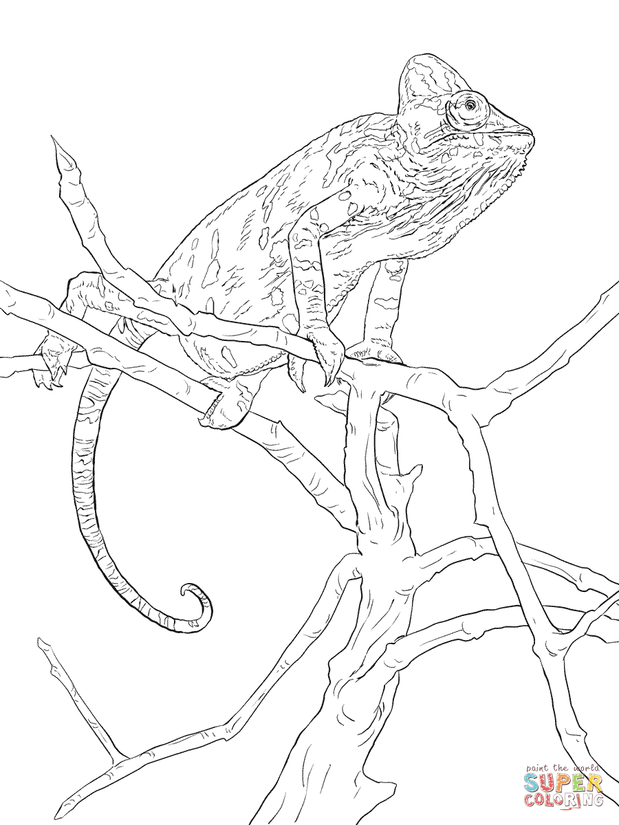 Realistic Veiled Chameleon Coloring Page From Chameleon Category Select From 29189 Printable Crafts Of Cartoon Chameleon Color Coloring Pages Veiled Chameleon