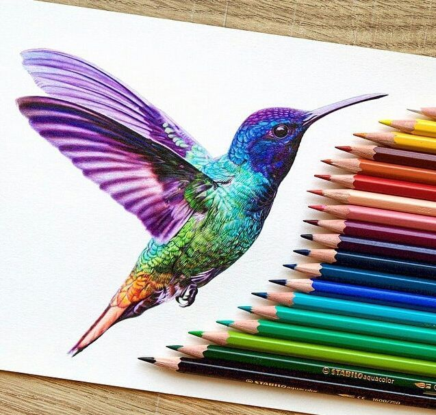 image result for hummingbird color drawings