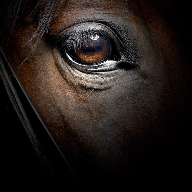 Ojo de caballo horses pinterest horse horse for Thoroughbred tattoo lookup
