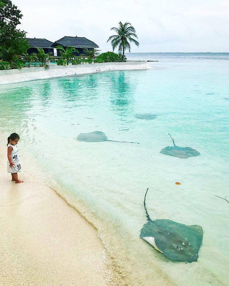 Jumeirah Vittaveli #Maldives.....whenever I see stingrays, I can't help but think of Steve Irwin & his death-by-stingray-barb.....so no thanks. #MaldivesPins