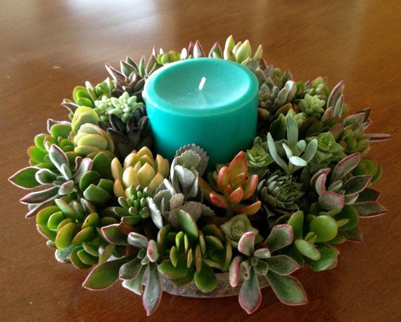 Christmas Succulent Centerpieces.Living Succulent Centerpiece For Thanksgiving Fall Holiday