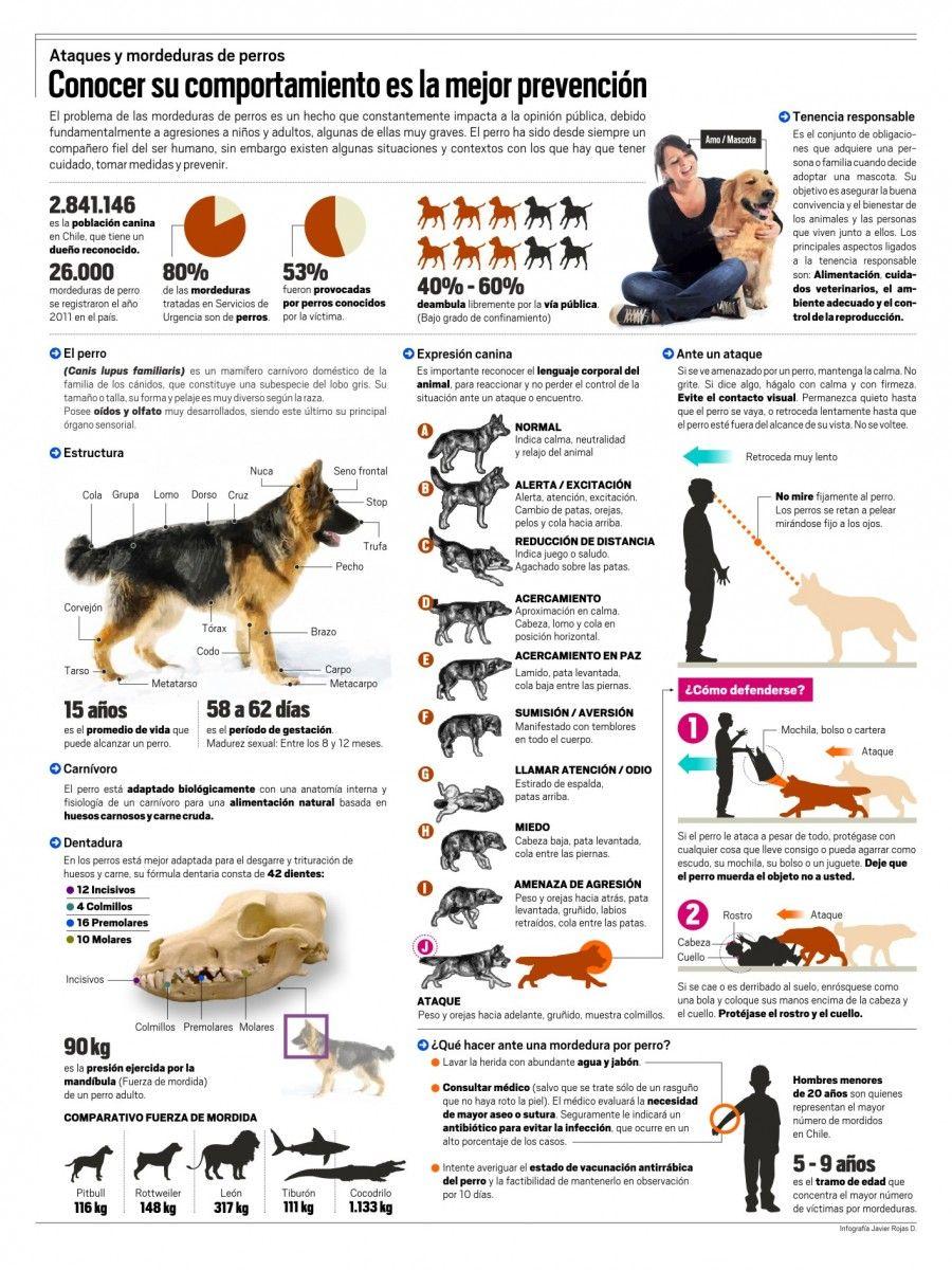 Cómo evitar el ataque de un perro Cuidado Bebés y Niños