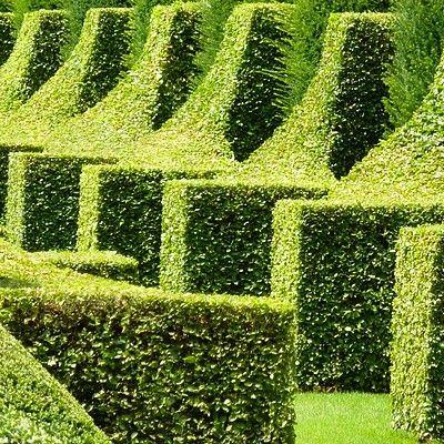 Arbustes topiaire jardin 1030 zone 4 topiaire jardins - Jardin topiaire ...