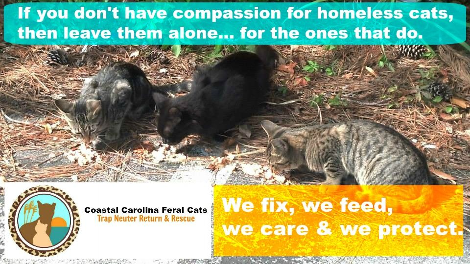 Coastal Carolina Feral Cats TNR & Rescue is a grassroots