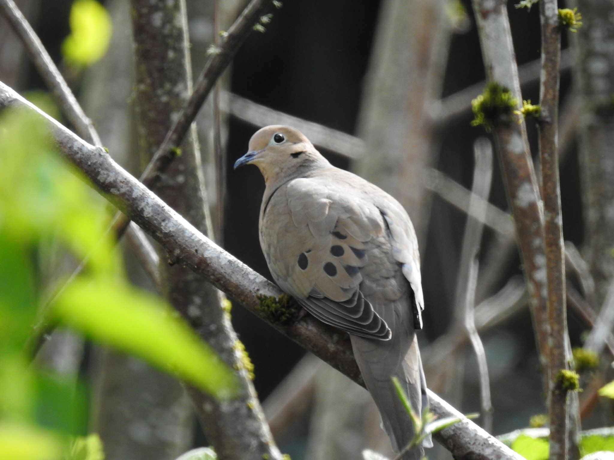 Backyard Birds (With images) | Backyard birds, Birds, Backyard on Birds Backyard Landscapes id=60812