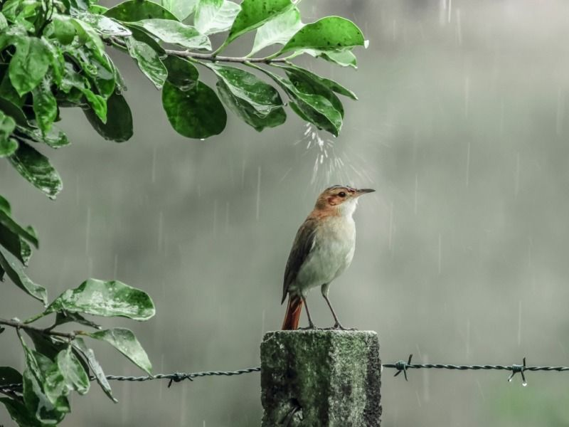 Birds In Rain One Hd Wallpaper Pictures Backgrounds Free Download