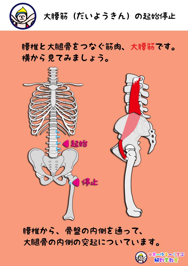 神経痛 股関節 坐骨