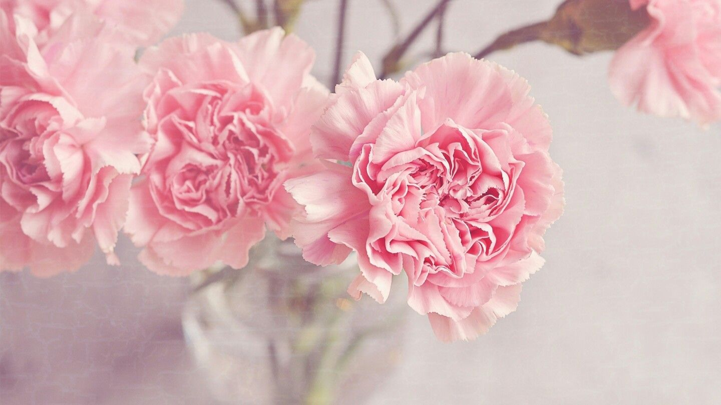 Pin By Elena On Cvety Pink Flowers Wallpaper Flower Wallpaper Pink Wallpaper Iphone