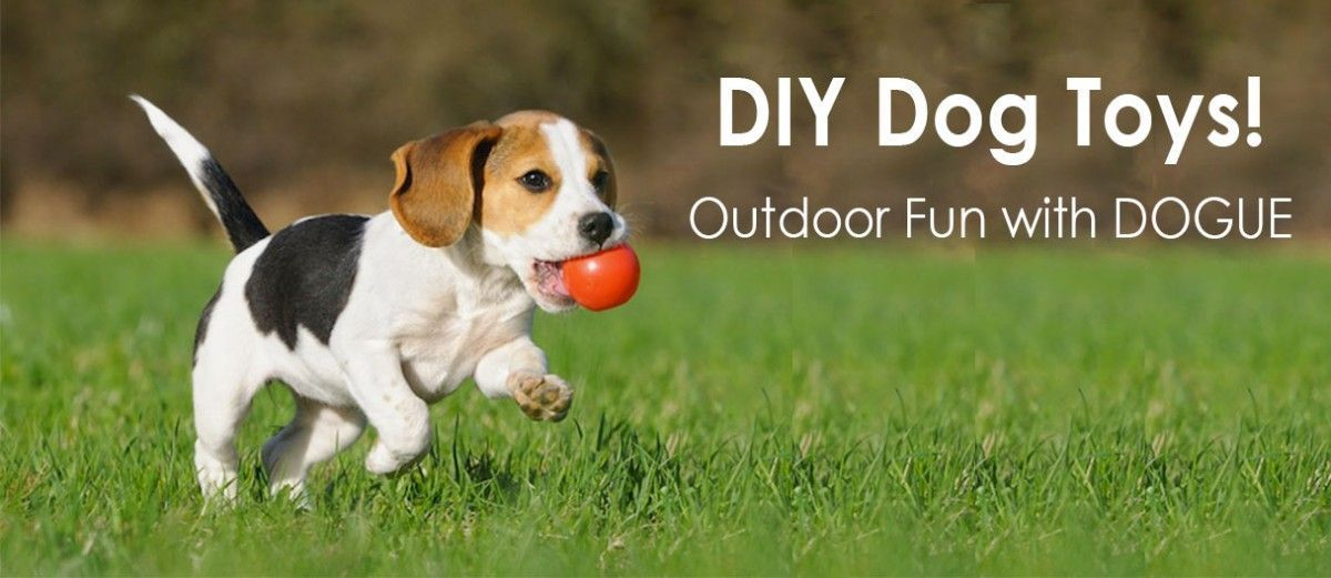 Dogue Is Forefront Of Canine Fashion Accessories Grooming And Luxury Dog Boarding In Australia Online Shop Bouti Outdoor Dog Toys Diy Dog Stuff Outdoor Dog