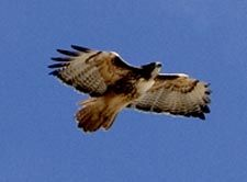 Klamath Wildlife Area