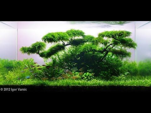 Ada 2008 2014 aquascape compilation all aquariums for Ada fish tank