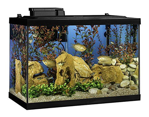Tetra Aquarium Kit 20 Gallon Standard Shopswell Aquarium Fish Tank Fish Tank Accessories Aquarium