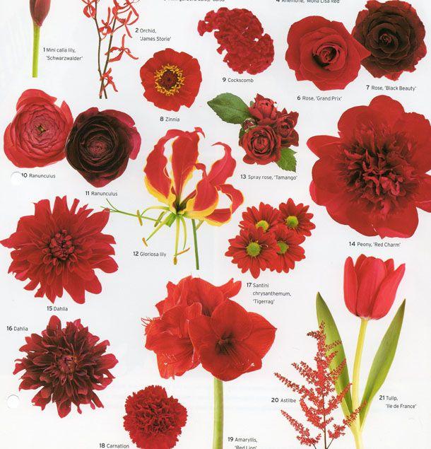 Martha Stewart Red Wedding Flowers Flower Guide Vintage Wedding Flowers