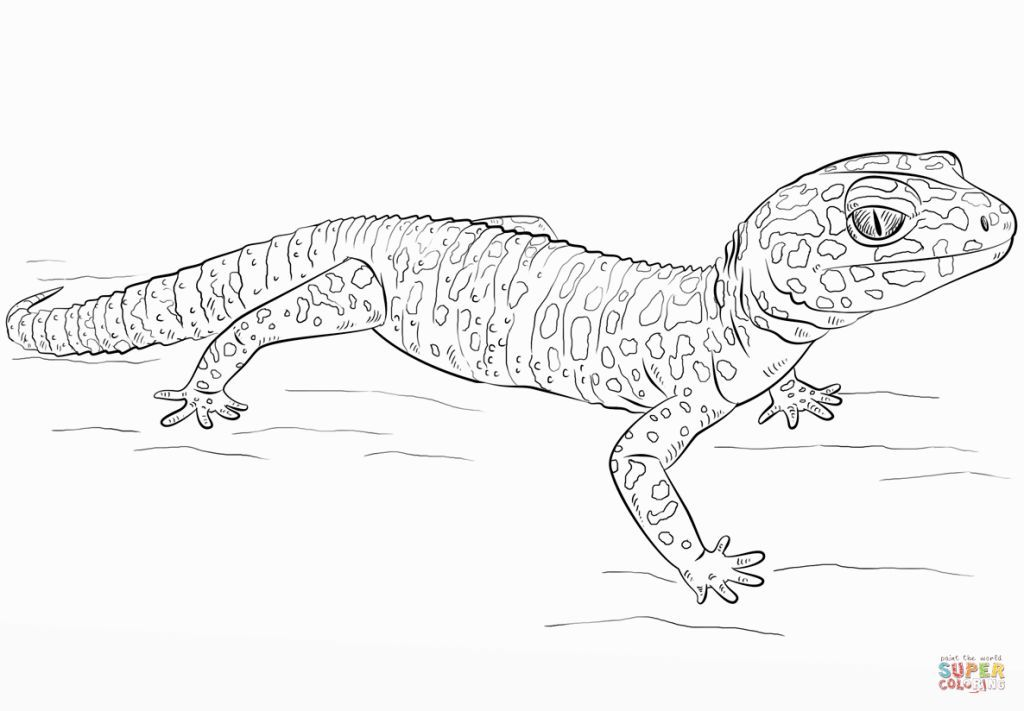 Leopard Gecko Coloring Pages Cute gecko, Coloring pages