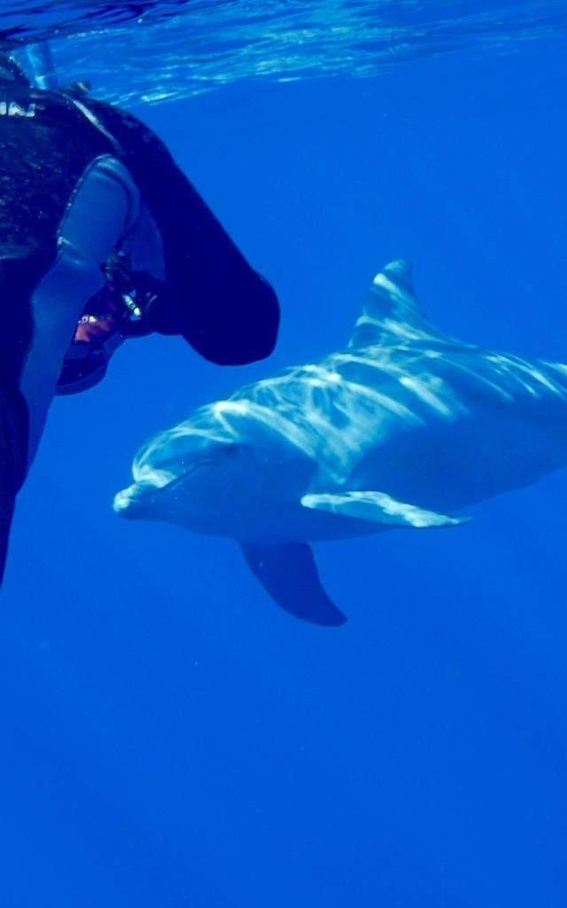 A la rencontre des cetaces | Île de La Réunion Tourisme