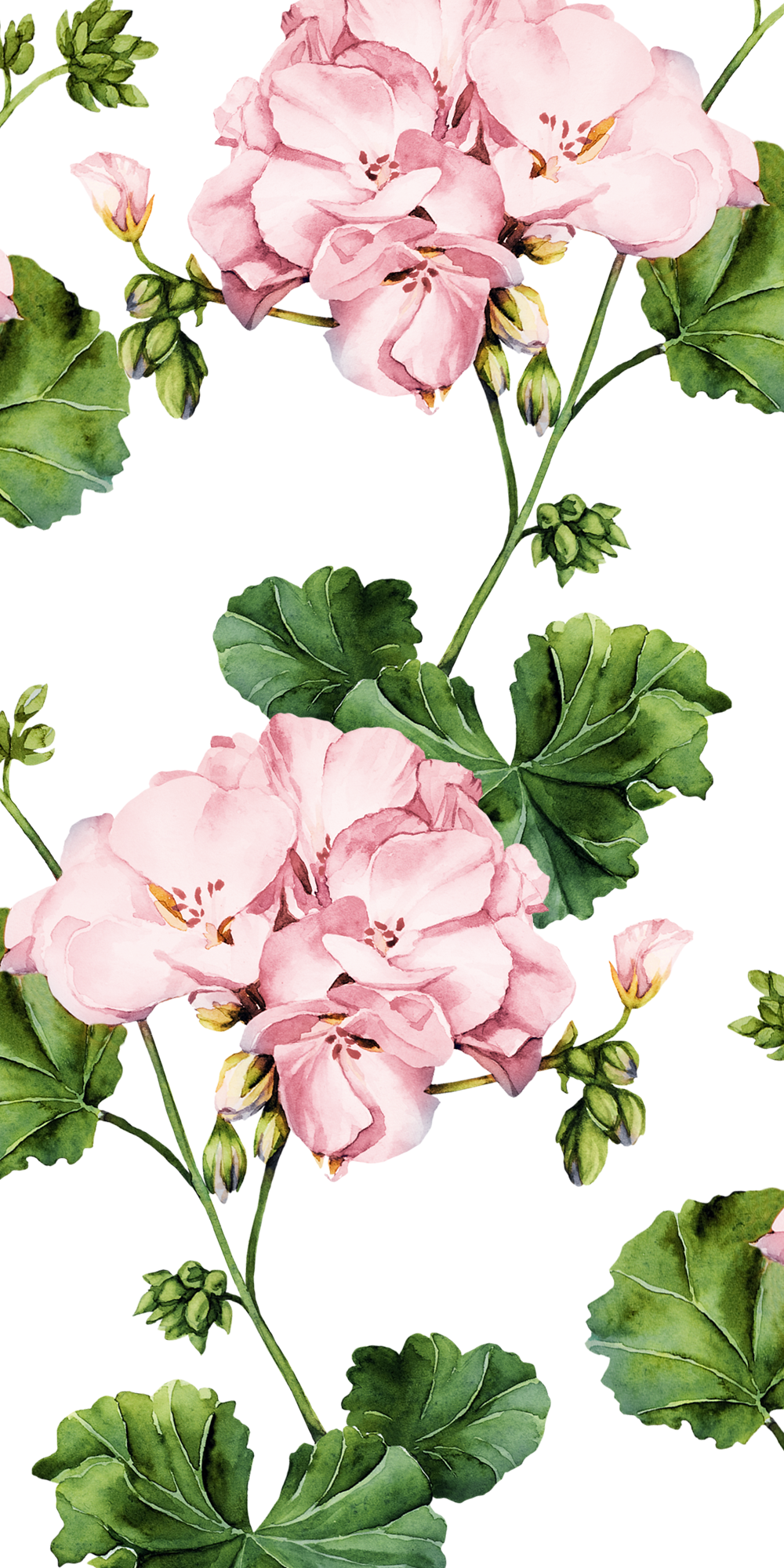 How About A New Floral Wallpaper For Your Iphone Casetify Flowers Geranium Art Design Flower Painting Botanical Floral Art Cute Patterns Wallpaper