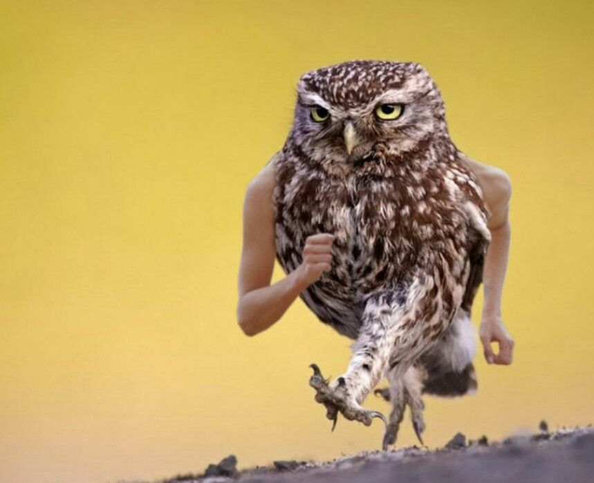 Owl Arms Funny Birds Owl Pictures Owl