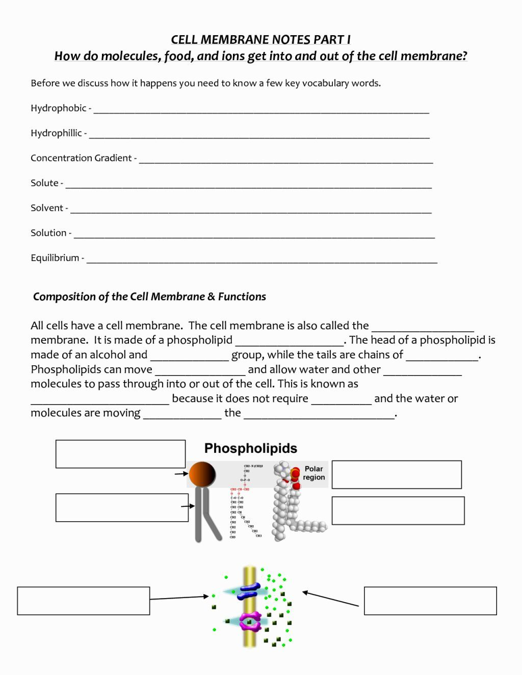 Cell Membrane Coloring Worksheet Colored
