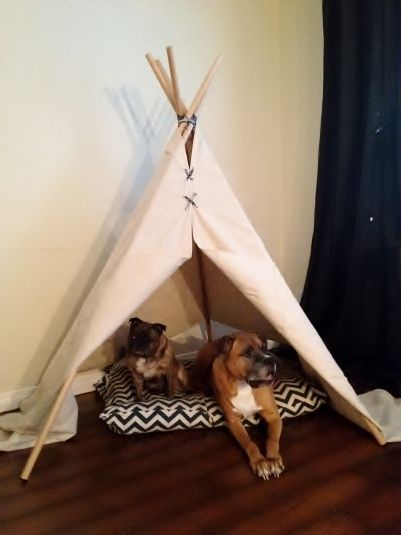 Teepee dog bed google search my pets pinterest dog for Diy cat teepee