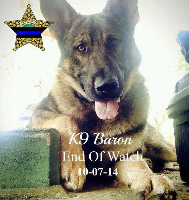 R I P K 9 Officer Baron All Types Of Poetry Susan Poems