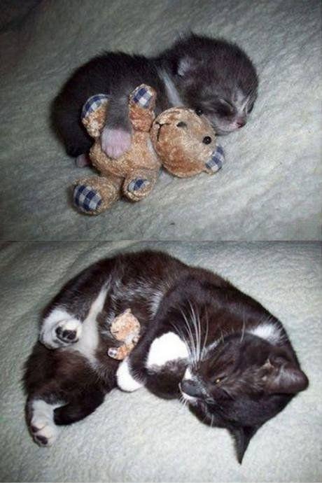 Erwachsen werden heißt nicht den Teddy aufgeben zu müssen - Cuteness Overload Bild | Webfail - Fail Bilder und Fail Videos