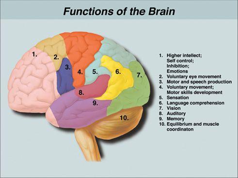 brain functions...helpful diagram!