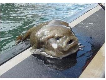 Weird Looking Ocean Fish 5