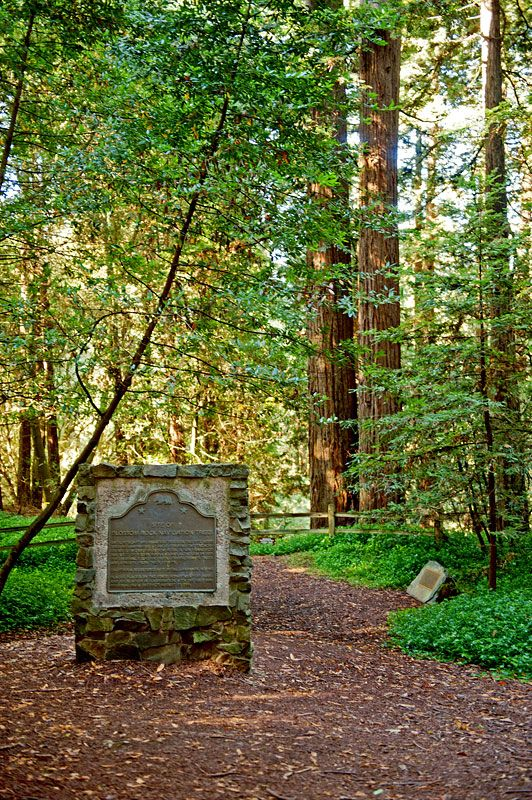 California -- Alameda County -- Oakland -- Blossom Rock Navigation Trees