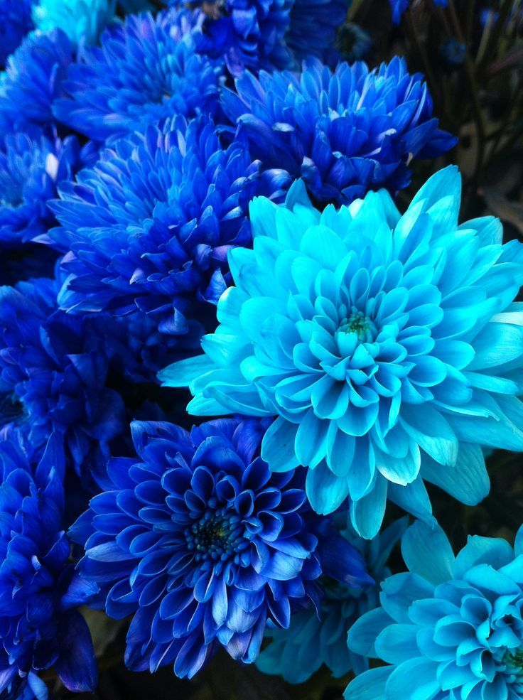 Blue Flowers Blue Flowers Garden Flower Aesthetic Blue Flower Wallpaper