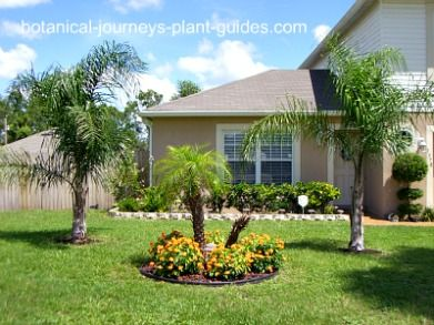 Pictures of palm trees for landscaping tropical landscape for Domestic garden ideas