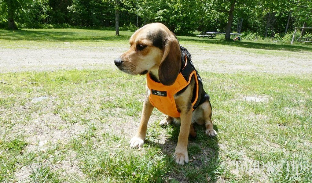 Review Sleepypod Clickit Terrain Harness for Dogs Crate