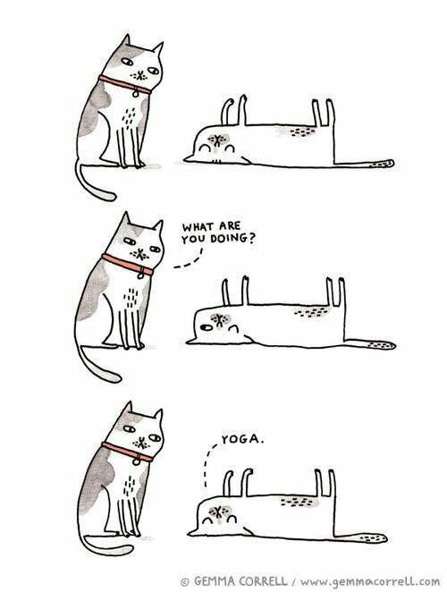17 bästa bilder om Yoga humor på Pinterest